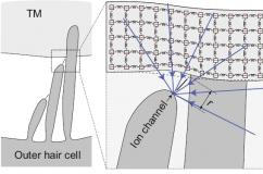 electrokinetics_model